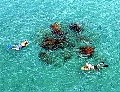 Snorkelers swim offshore of  Red Reef Park in Boca Raton.