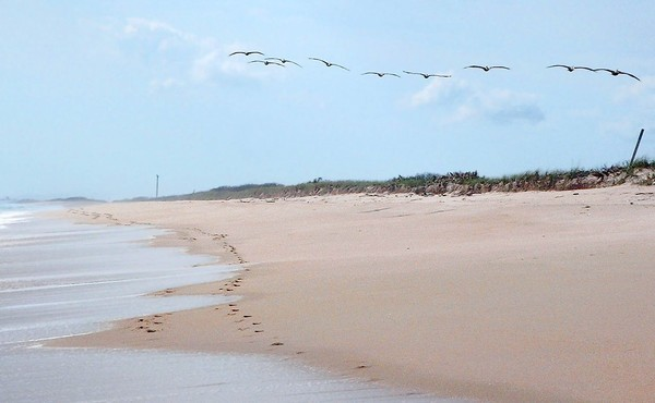 A flight of pelicans makes its way north along Klondike Beach at Canaveral National Seashore.