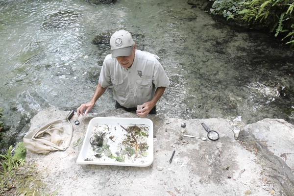 Gary Warren, a biological scientist with the Florida Fish and Wildlife Conservation Commission, inventories invertebrates at Rock Springs in Apopka on Saturday.