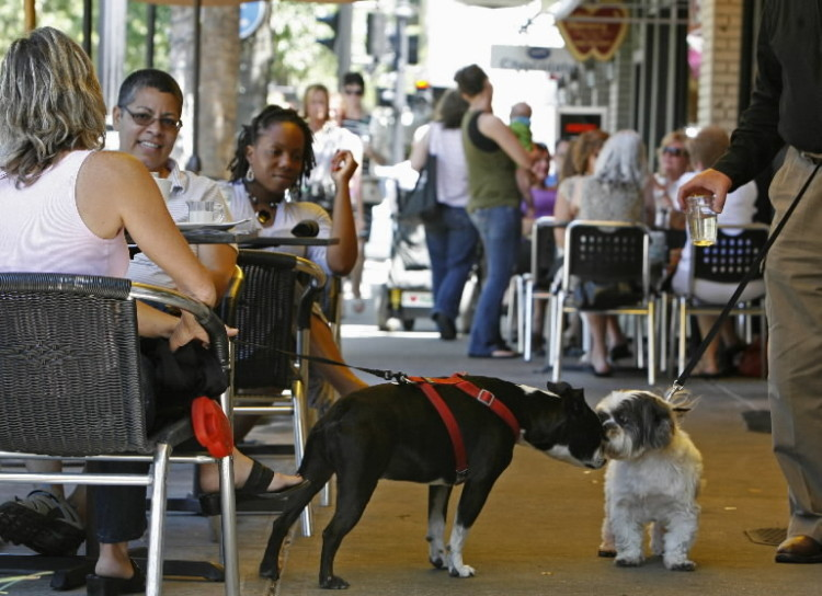 "Carla Caetano's ""Ziggy,"" left, and Ron Steinberg's ""Barnie"" get acquainted along Park Avenue in Winter Park on Thursday. Caetano, far left, of Port Charlotte was enjoying dining with ""Ziggy"" at 310 Park South. (Gary W. Green/Orlando Sentinel)"
