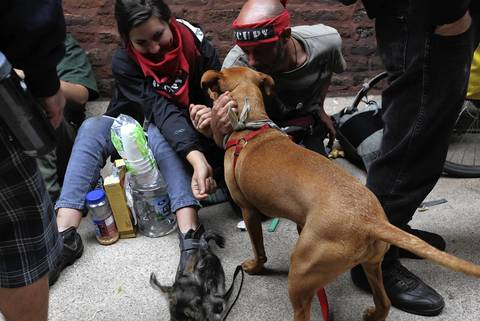 NATO protesters play with dogs inside the Wellington United Church of Christ. The protesters are expected to leave the church Monday evening.