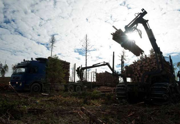 Clear-cutting of an old-growth forest by IKEA/Swedwood in the Russian Karelia in 2011.