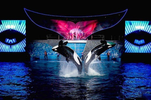 """Shamu Rocks"" is part of SeaWorld Summer Nights."