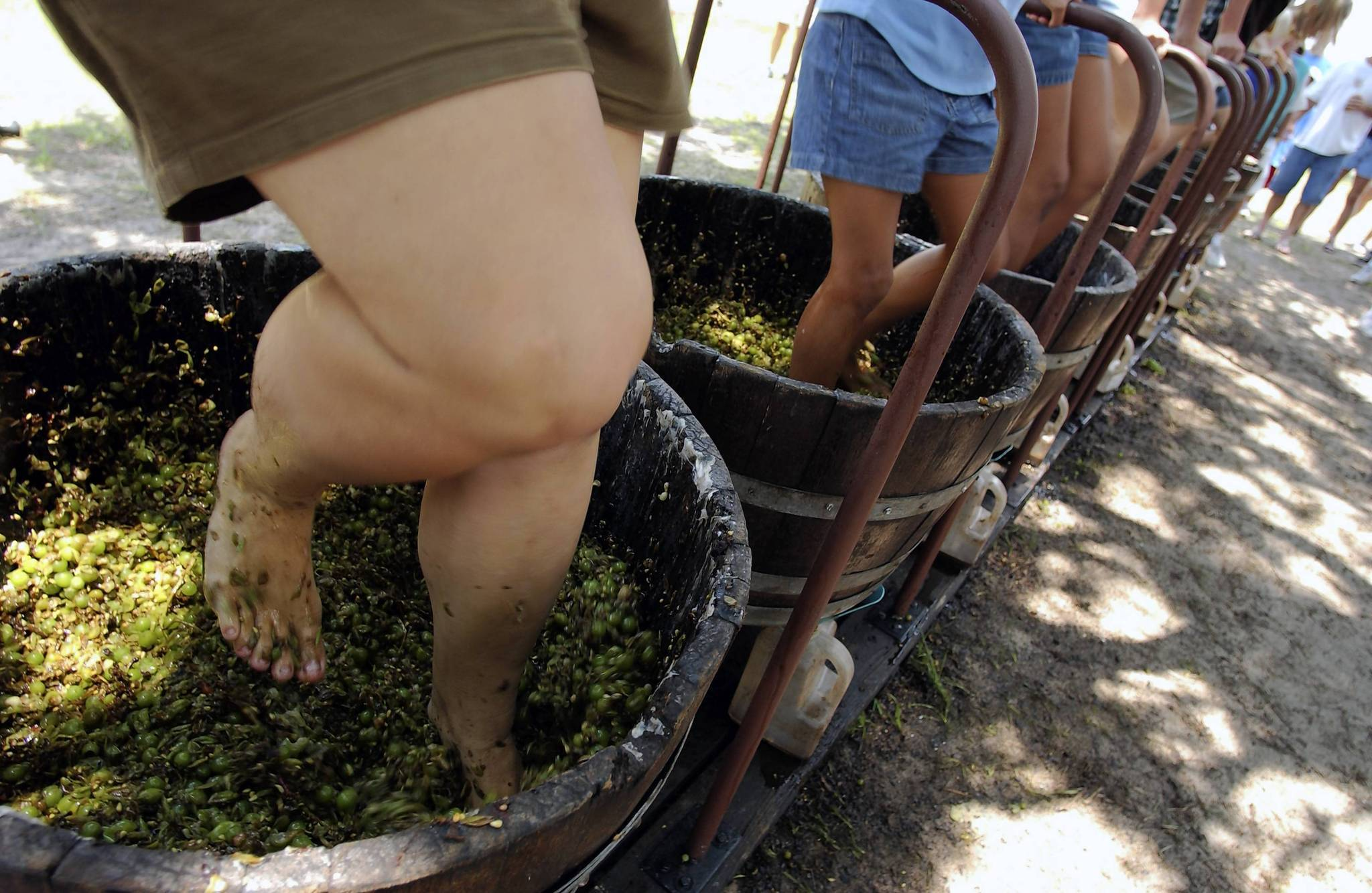 The annual Harvest Festival at Lakeridge Winery and Vineyards features activities such as grape stomping.