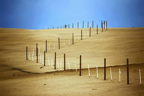 Mt. Baldy now has temporary fencing to slow the movement of sand to the south. The dune is unstable due to lack of grass and from people climbing it's southern side. A new trail guides visitors up a different route.