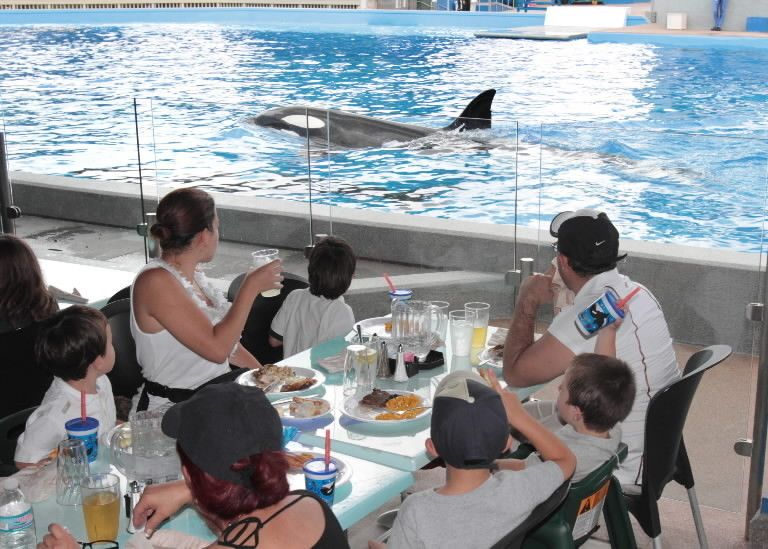 SeaWorld Orlando guests watch whales swim during a meal in the Dine With Shamu experience, which reopened Monday.