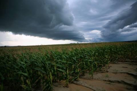 Storm clouds loom over thirsty corn crops near Jonesboro.