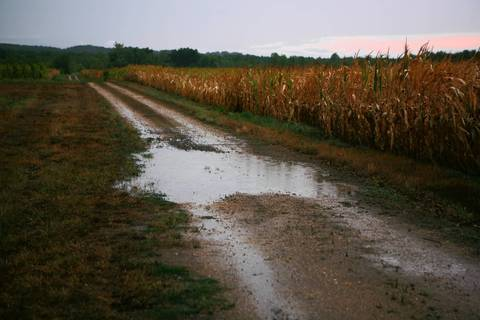 A puddle forms from a rain storm that came too late to save corn crops near Wolf Lake in Union County.