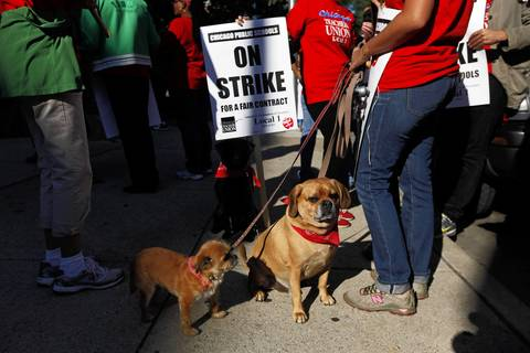 """Lola,"" left, and ""Murphy,"" right, owned by Kelly Alleya, a 4th grade teacher at Eugene Field Elementary School, sit on the sidewalk on the picket line outside of Stephen F. Gale Math & Science Academy in Chicago. Some of the teachers brought their dogs to the picket line instead of leaving them home alone all day."
