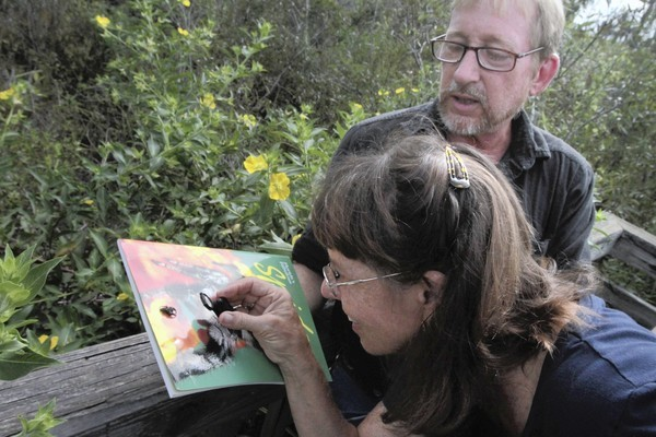 "Naturalist Fred Bohler helps Lavon Silvernell look at a hopping spider. He is an expert on spiders and walks the trails at Trout Lake Nature Center with people attending a ""Bugged Out"" program in search of the creepy crawlers. 582426115Z.1  (George Skene/Orlando Sentinel)"