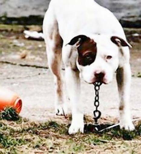 After the March 4 grace period passes, Mount Dora residents will be fined for tethering dogs.