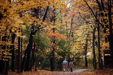 The trees show their changing colors along Grove Portage Trail at the River Trail Nature Center in Northbrook.