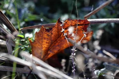 The fall morning sun glows through dew-covered leaves at Miller Meadow in Maywood.