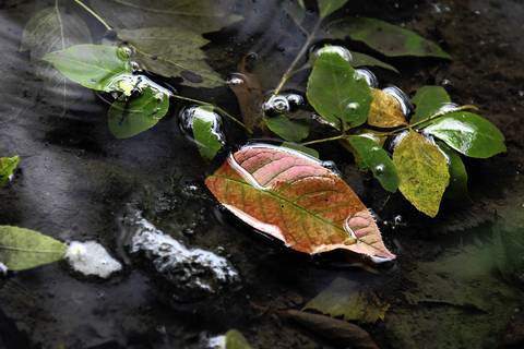 Changing leaves float in a puddle at Fullersburg Woods Forest Preserve in Oak Brook.