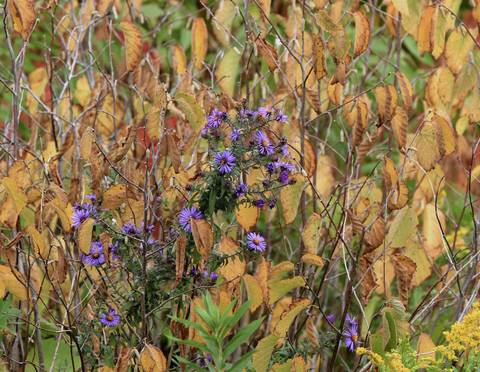 Foliage in Springbrook Prairie Forest Preserve starts to turn colors as the calendar flips to October.