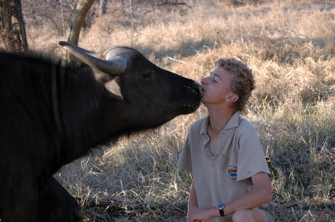 Luke Michaelides gets and kiss from Skip the cape buffalo in Limpopo Province, South Africa.