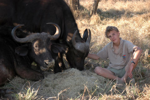 Luke Michaelides sits next to cape buffaloes Hop and Skip in Limpopo Province, South Africa.