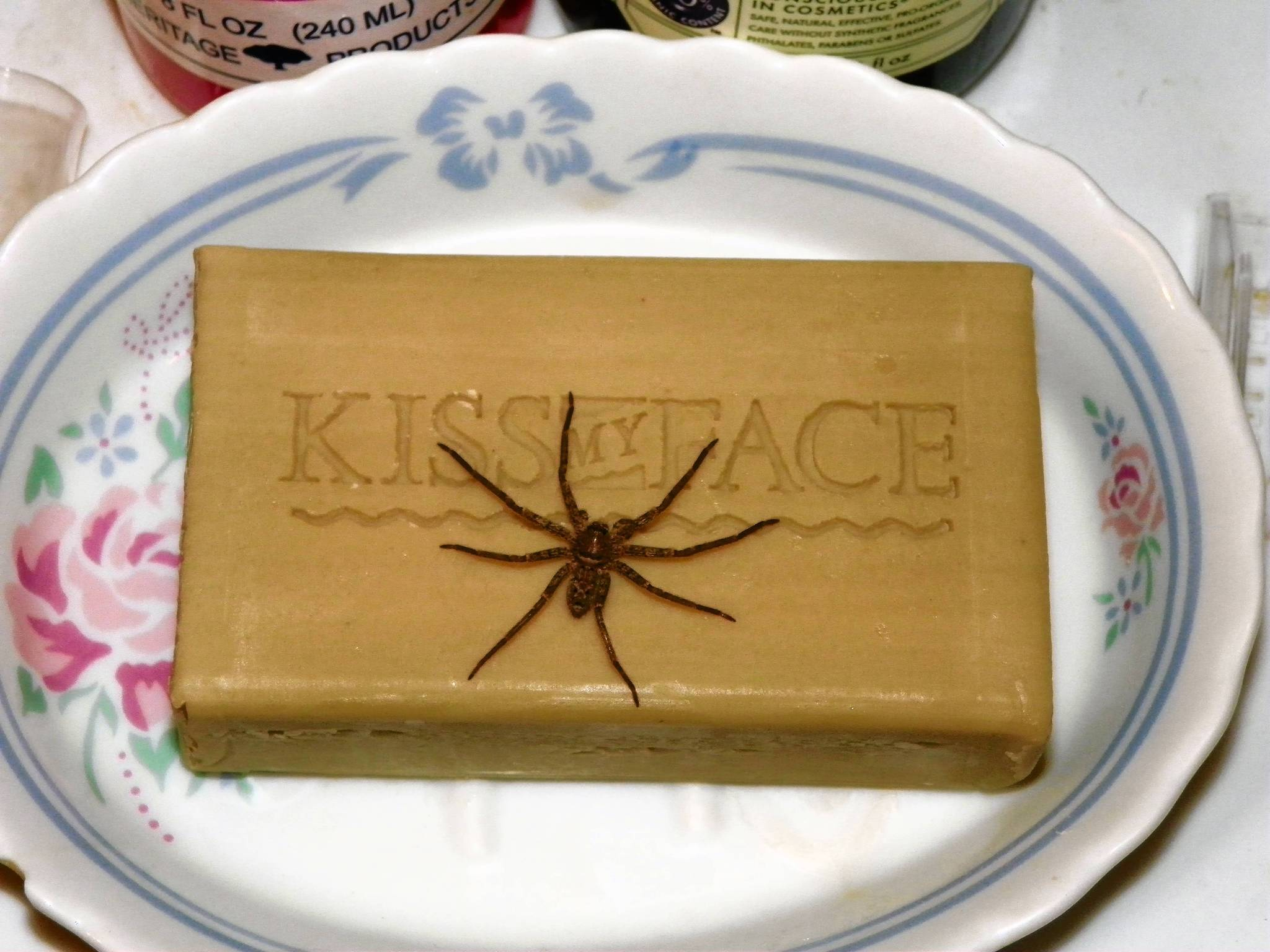 A juvenile huntsman spider waits for prey atop a bar of Kiss My Face soap.
