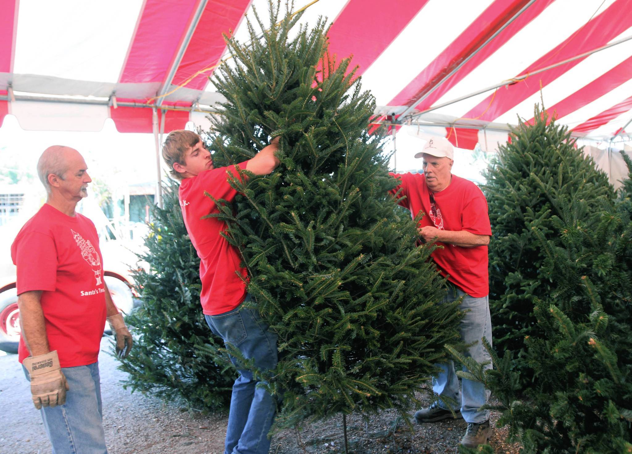 Workers Randy Settle and Michael Dever adjust a tree with Warren Brown, owner of Santa's Trees X-mas tree lot in Maitland.