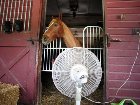 As the temperature outside his stable climbs toward 100 degrees, Tucker takes advantage of a cooling fan outside his stall at Danada Equestrian Center in Wheaton. Tucker, a 16-year-old quarter horse mix, has a condition that makes him more sensitive to higher temperatures. Click here to see more photos from the summer heat wave.