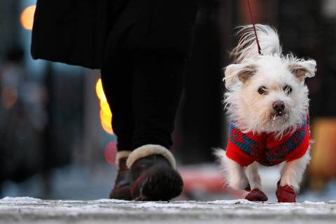 Wearing boots and a sweater to keep warm, Kiki crosses LaSalle Street with her owner, Zofia Texton, as they take their evening walk.