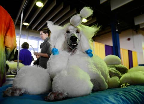 Rerun Of Westminster Dog Show