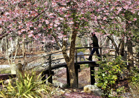 Steve Tran, of Maryland, walks his dog Tobie across the bridge in Peace Garden of Newport News Park Tuesday afternoon.