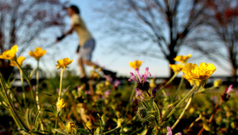 A roller blader rolls by as flowers begin to bloom along the bike path at Riverview Farm Park Wednesday evening.