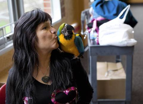 Cindy Bernal has a kiss for her macaw Oz, 21, at the Red Cross shelter in the student center at Benedictine University in Lisle. Bernal was not able to grab Oz's cage when she left her flooded home.