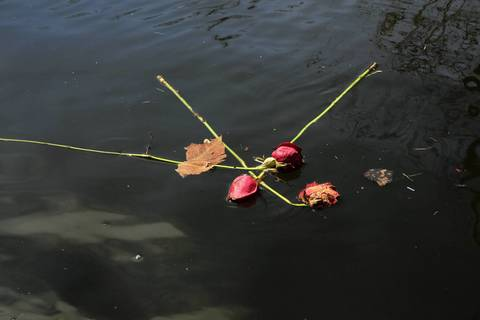 Roses are among the flotsam floating in floodwaters along Knollwood Road in Fox Lake. The area is still submerged by recent heavy rains.