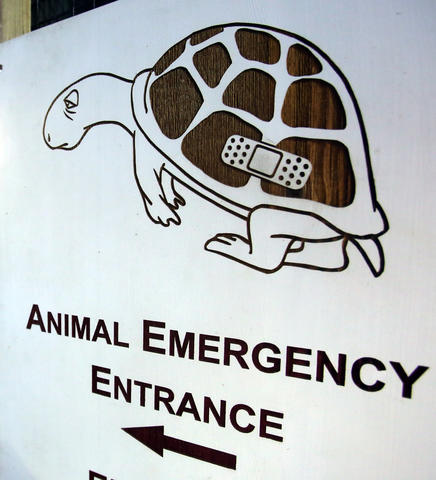 The entrance sign at the Sea Turtle Hospital at the Marine Science Center, in Ponce Inlet, Fla., Friday, April 19, 2013. (Joe Burbank/Orlando Sentinel) cci ID Newsgate# .B582862214Z.1