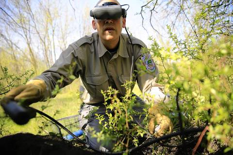 Chuck Rizzo, wildlife biologist for the Forest Preserve District of Cook County, inserts a remote infrared camera into a prospective coyote den in a northwest suburban forest preserve. Researchers for the forest preserve, along with those from the Max McGraw Wildlife Foundation, were searching for pups still in or near their dens.