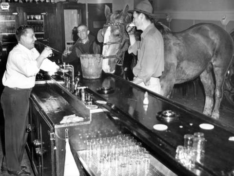 """A horse named """"Admiral"""" strayed away from a garden plowing job to the cool atmosphere of a bar at 8901 Lowe Avenue in Chicago on May 20, 1948. Drinking with Admiral is customer Marshall Polo, right, the bartender and owner Orval Hatton, left, and customer Orville Rowe, second from left."""