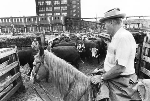 Steers are moved out of the cattle pin so a buyer can have a closer look at the cattle for purchase on May 29, 1970. By riding horseback, they were able to get a better view of the cattle.