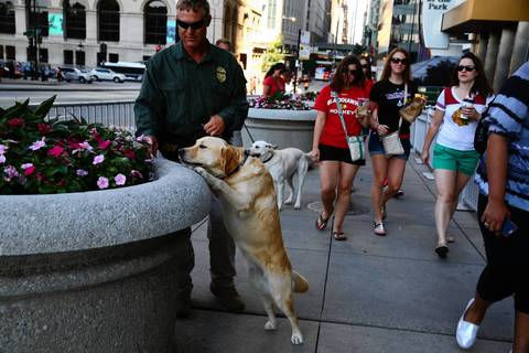 ATF special agent Mitchell Wido and Deja, an explosives-sniffing dog, check the planters on Randolph Drive outside the Blackhawks rally in Chicago.