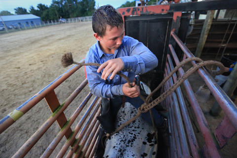 Kailer Mccoy, 14, ties ropes to the bull he will ride during the Kissimmee Sports Arena Rodeo on Saturday, July 13, 2013. (Megan May/Orlando Sentinel)