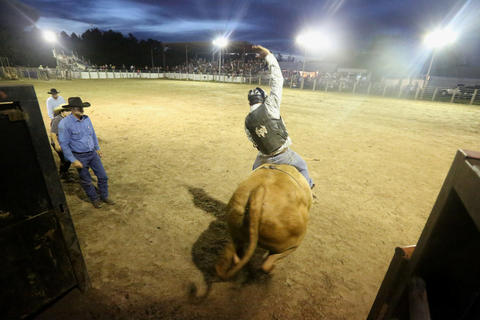 A bull shoots out of the gate during the Kissimmee Sports Arena Rodeo on Saturday, July 13, 2013. (Megan May/Orlando Sentinel)