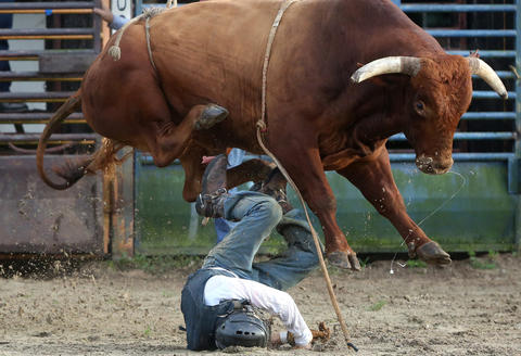 Cody Fletcher is narrowly missed by a bull at the Kissimmee Sports Arena Rodeo on Saturday, July 13, 2013.  (Megan May\Orlando Sentinel)