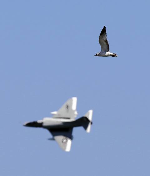 A seagull flies in the direction of an A-4 Skyhawk jet above Lake Michigan during the Chicago Air and Water show.
