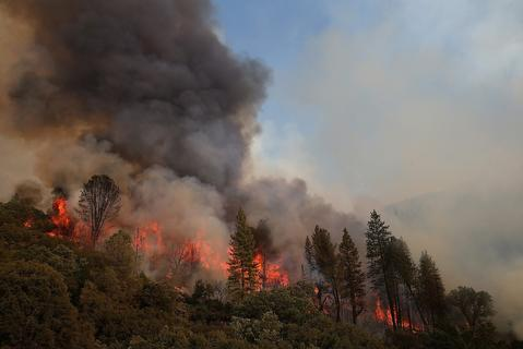 Fire consumes trees along US highway 120 as the Rim Fire burns out of control on August 21, 2013 in Groveland, California. The Rim Fire continues to burn out of control and threatens 2,500 homes outside of Yosemite National Park. Over 400 firefighters are battling the blaze that is only 5 percent contained.