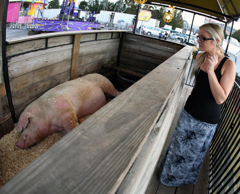 Vanessa Vitale, of Breinigsville, gets a look at Porky, the 1100 pound pig, during the Great Allentown Fair Thursday August 29, 2013.