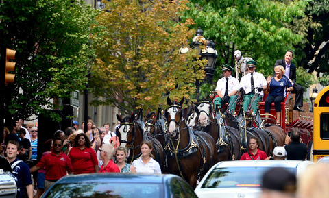 The Budweiser Clydesdales makes their way south on Main Street Thursday afternoon.