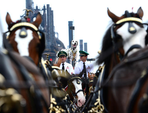 The Budweiser Clydesdales start their journey in South Bethlehem with Brewer the Dalmatian in tow Thursday afternoon.