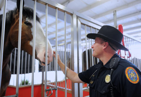 The Budweiser Clydesdales arrived at the Bethlehem Municipal Ice Skating Rink on Monday. Timothy Brooks, a Mounted Police Officer in Bethlehem, pets one of the Clydesdales. They are here for deliveries in the valley and will be in here until next week.