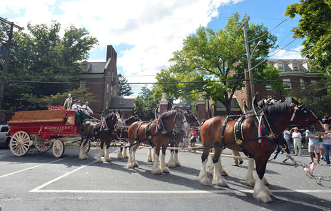 Budweiser Clydesdales and Mayor Sal Panto stop in front of Lafayette College in Easton on Friday, September 13, 2013. The Budweiser Clydesdales marched through downtown Easton up to College Hill delivering cases of beer along the way. .