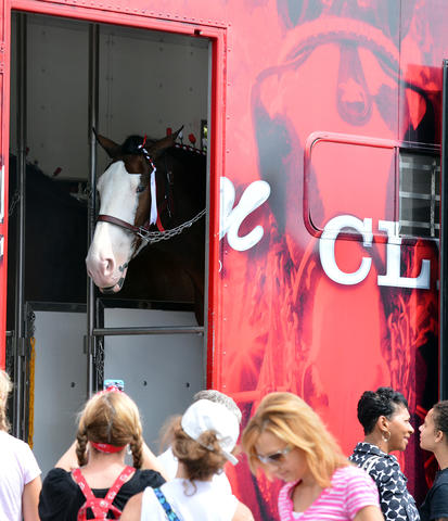 Crowds gather to watch The Budweiser Clydesdales get ready to march through downtown Easton on Friday, September 13, 2013. The Budweiser Clydesdales marched through downtown Easton up to College Hill delivering cases of beer along the way. .