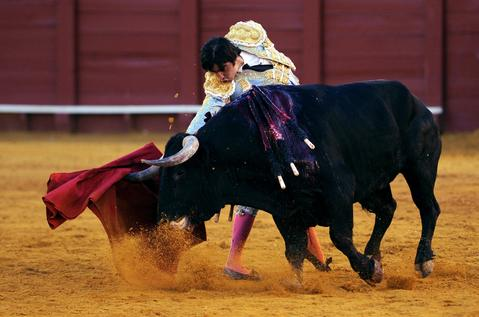 Spanish matador Miguel Angel Perea performs a pass on a bull during a bullfight at the Maestranza bullring in Sevilla on September 28, 2013.