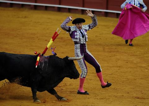 A banderillero performs a pass on a bull during a bullfight at the Maestranza bullring in Sevilla on September 28, 2013.
