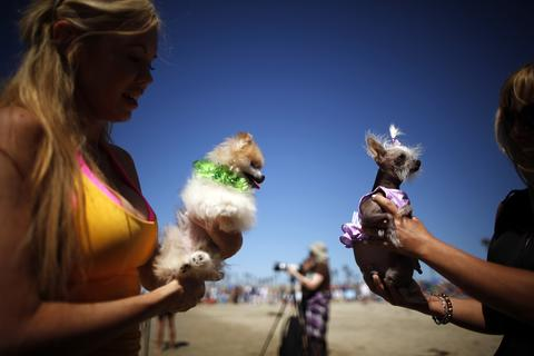 Women hold their dogs at the beach during the Surf City surf dog competition in Huntington Beach, California, September 29, 2013.