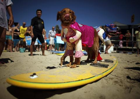 Dogs in costume wait to compete in the Surf City surf dog competition in Huntington Beach, California, September 29, 2013.
